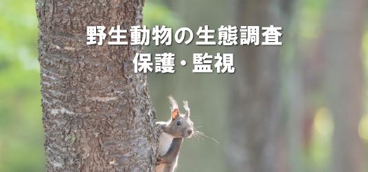 野生動物の生態調査、保護・監視